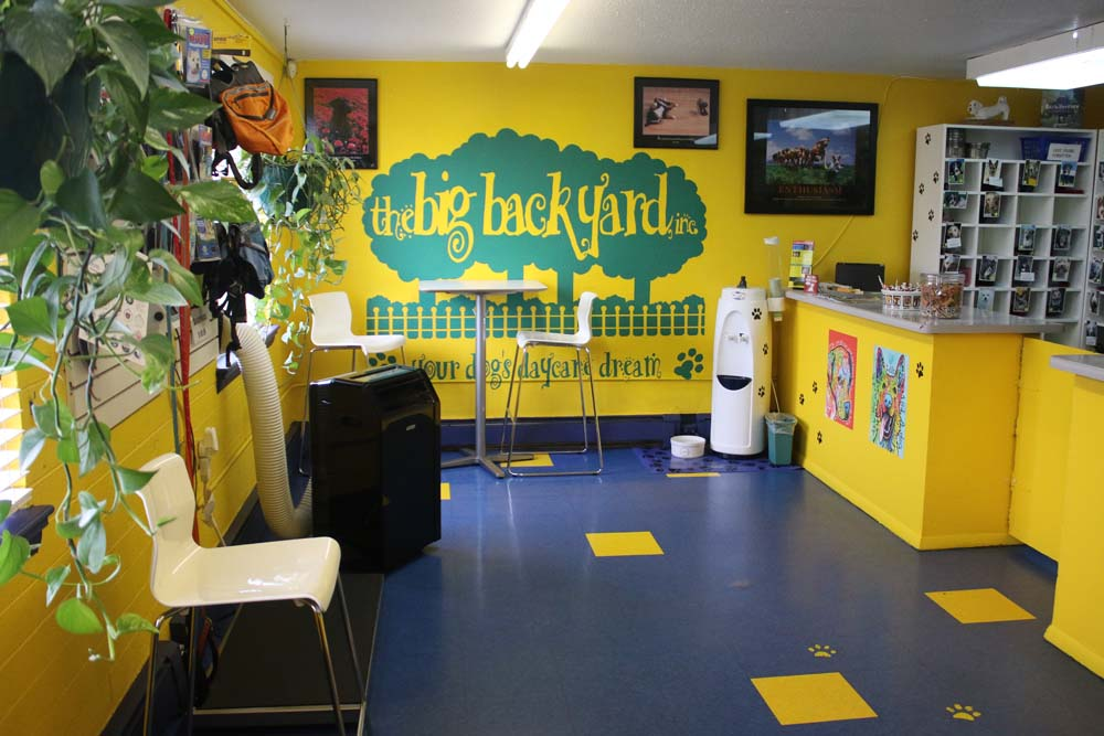 doggy daycare in denver metro the big backyard facility