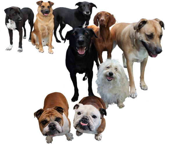 Dog Daycare Reviews